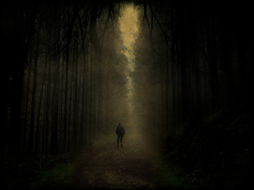 dark_forest_walk_by_tadbeer
