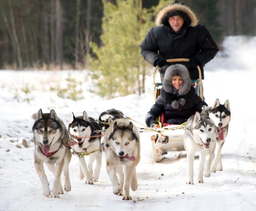 husky-dog-sledding-rides-vilnius-6