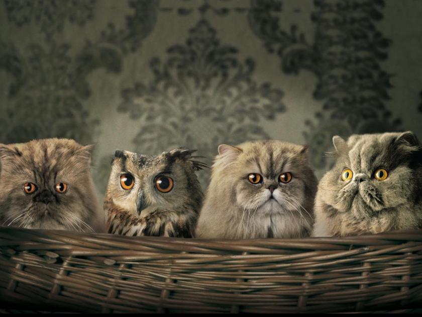 Funny-Animals-animal-humor-29016350-1280-960
